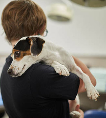 Vet tech student hugging small beagle dog.